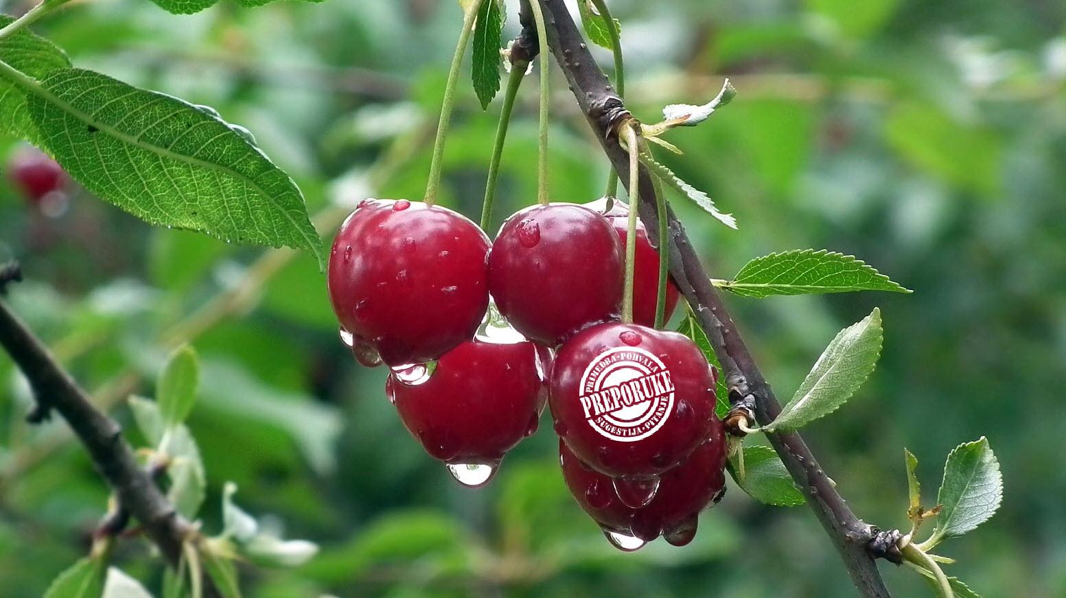 preporuka voća